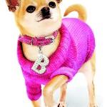 Pletený svetr pro malé psi v kombinaci s koženým obojkem s křišťálovou aplikací