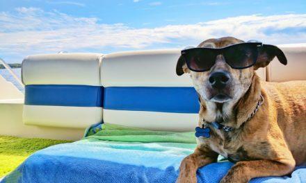 Pozor na letní vedra u psů. Mohou přinést mnoho komplikací
