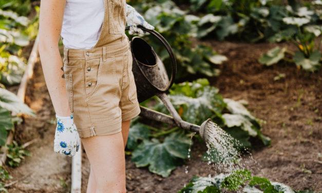 Bojujete s plevelem v zahradě?