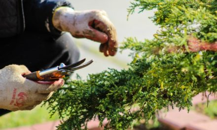 Zahradničte bezpečně. Nejen na podzim dochází k častým poraněním při práci na zahradě