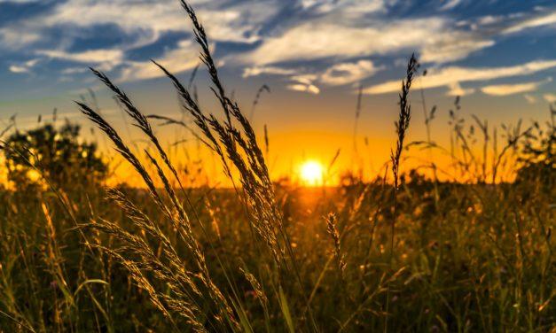 Jak vláda za čtyři roky splnila své sliby v oblasti udržitelného zemědělství? Ve většině neuspěla, hodnotí experti